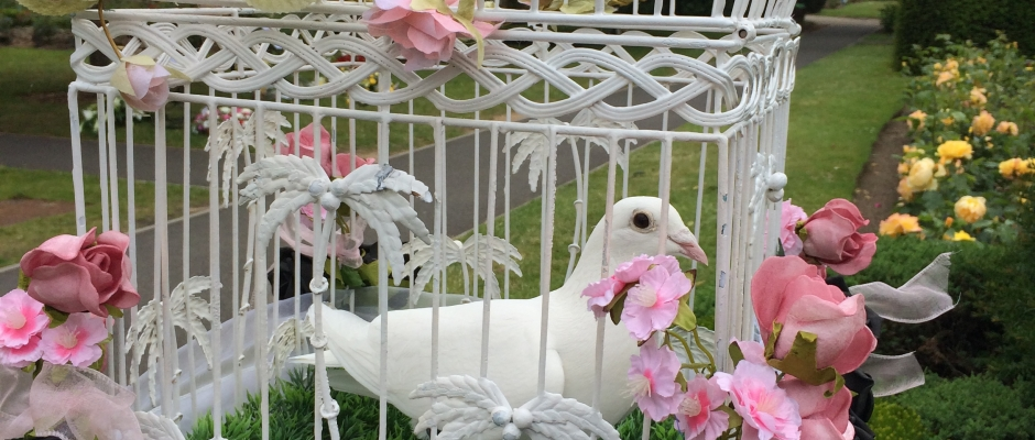 dove release for funerals in norwich