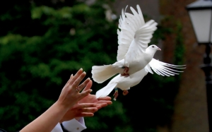 dove being released at a funeral