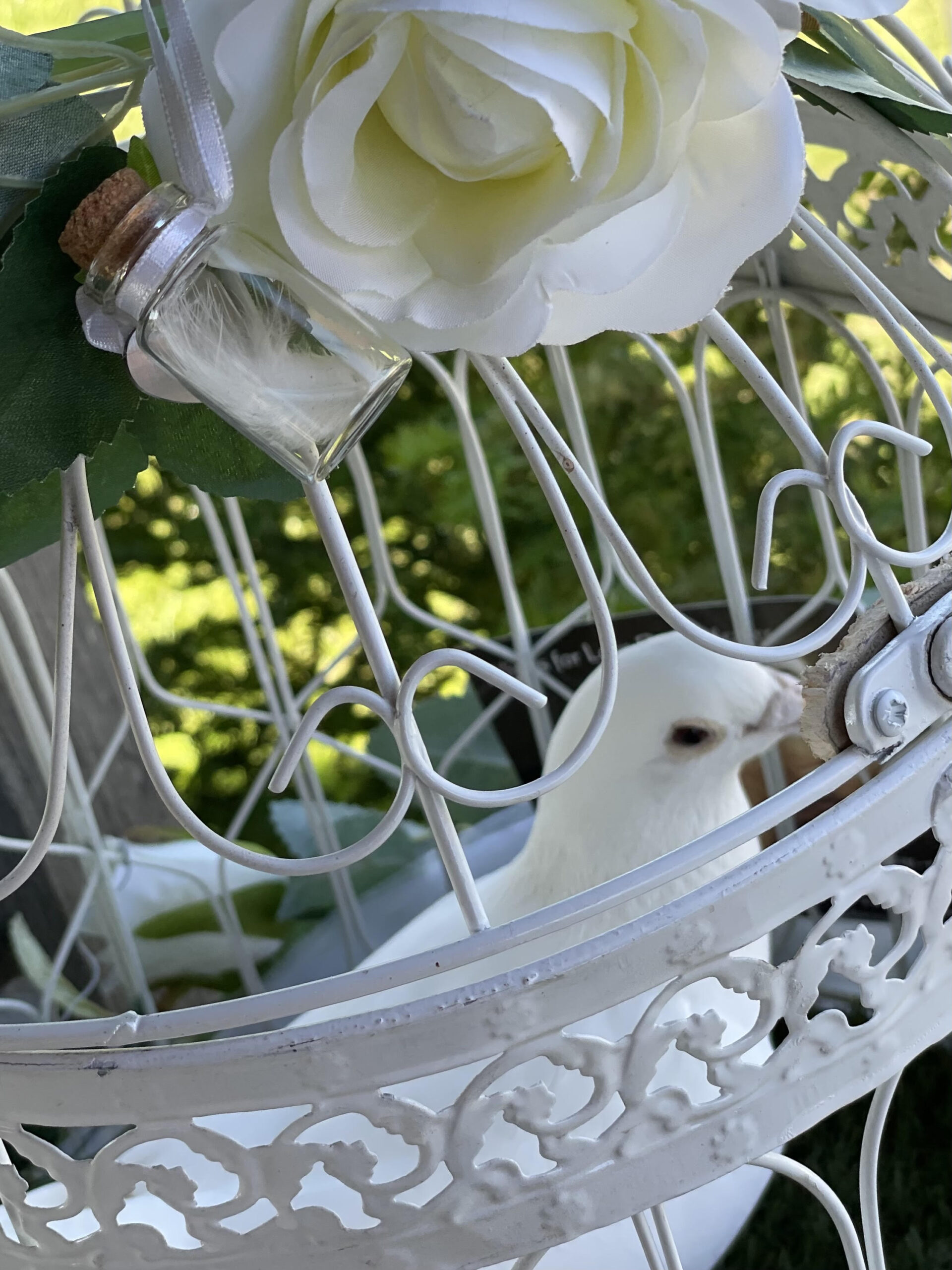 white dove at a funeral